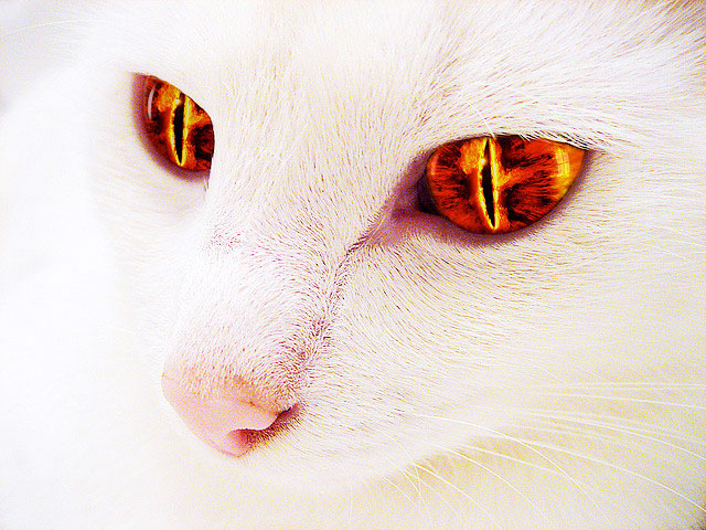 Sauron_cat_Lord_of_the_Rings