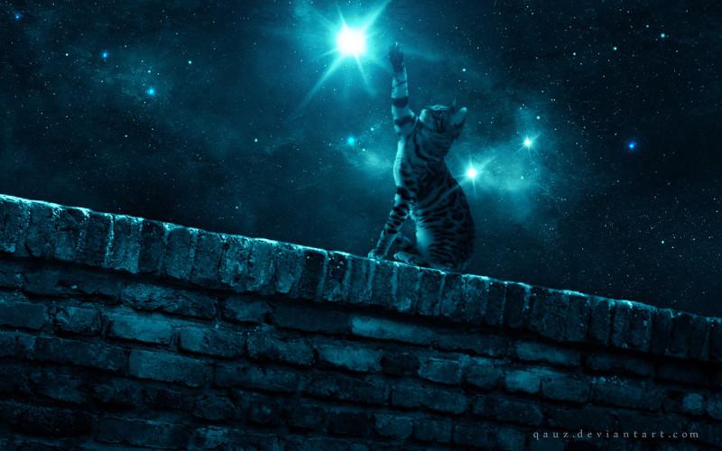 кот звездолов