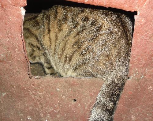 камуфляж кота