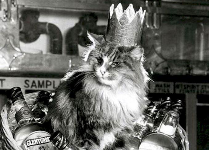 queen towser