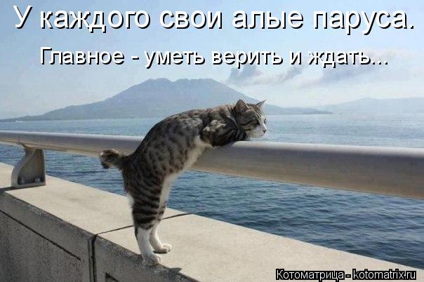 kotomatritsa_RX