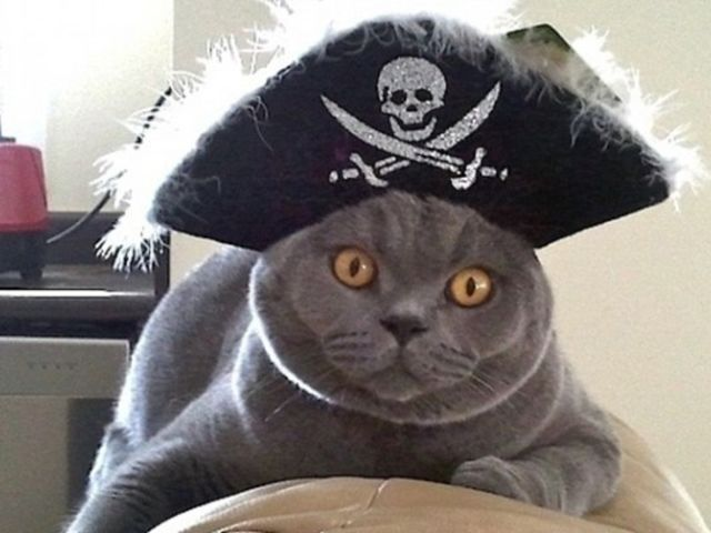 пират котэ