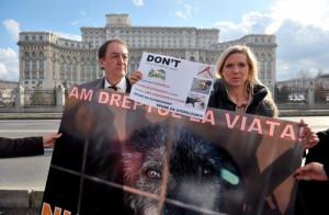 майя пикет перед парламент Румынии