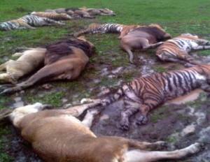 вита убитые львы