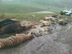 вита убитые медведи