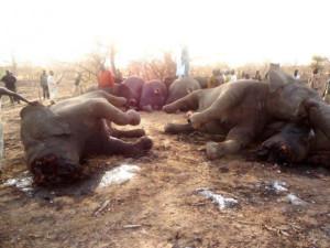 вита слоны мертвые