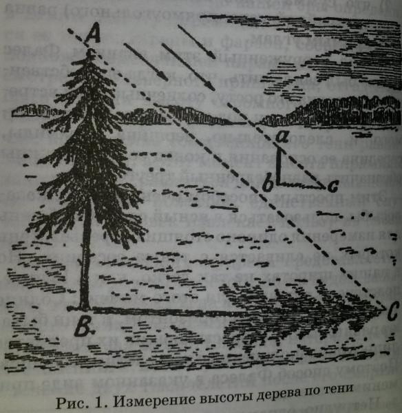 Рис. 1 Измерение высоты дерева по его тени
