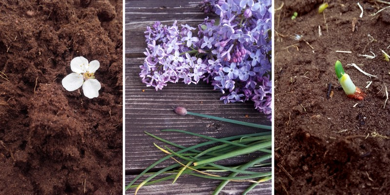 Pavasaris darzam-m.jpg
