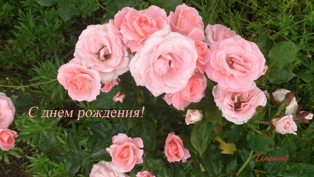розы для
