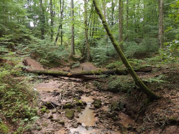 Tiefenbach near Pfrondorf 2014-08-17