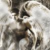 wings-