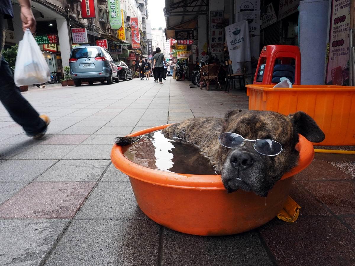 Загораю на пляжу: Отдых уличного пса по-тайваньски