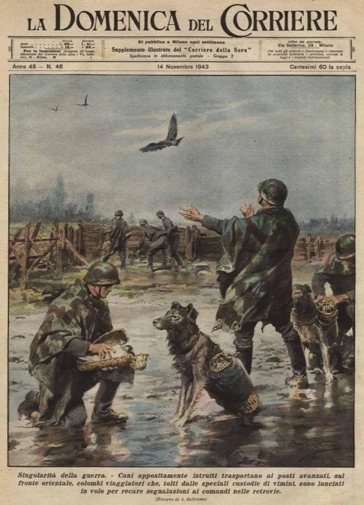 Особенности войны. Собаки, специально обученные для несения службы на наблюдательных пунктах и форпостах Восточного фронта, служат средствами доставки туда почтовых голубей - Achille Beltrame