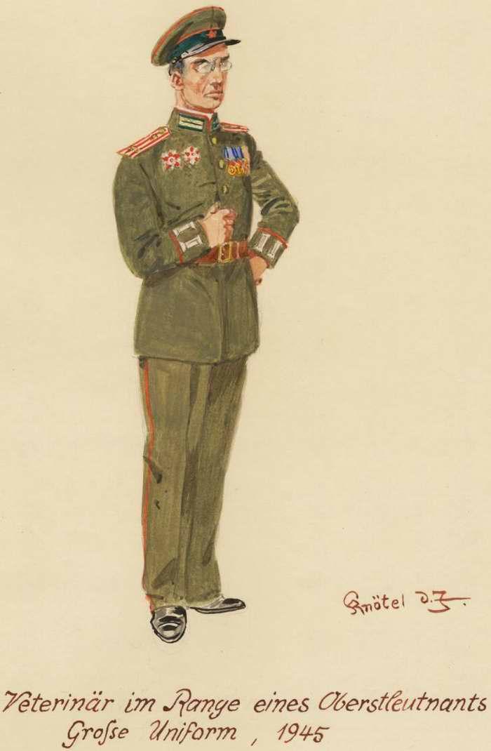 Подполковник ветеринарной службы - 1945 г. (Herbert Knotel)