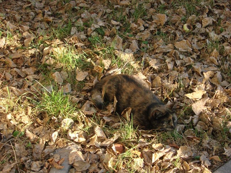 41 найди кошку