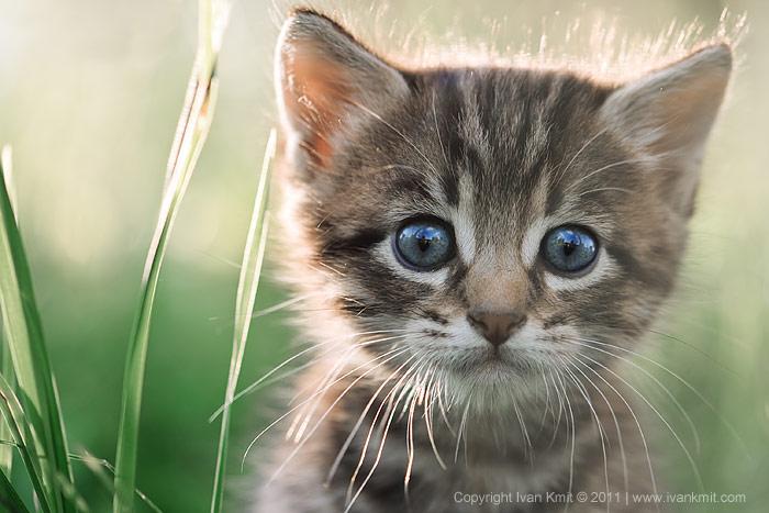 августовский котик