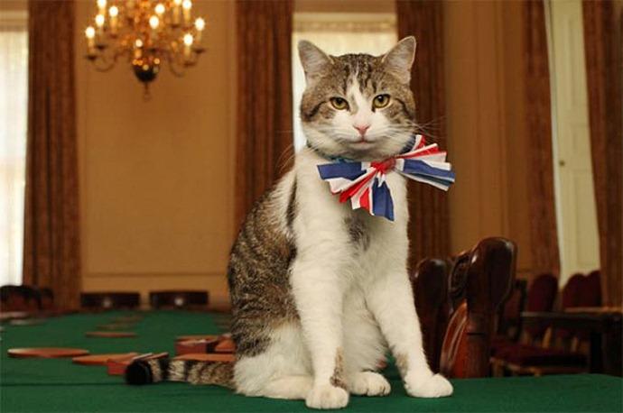 Ларри кот Дэвида Кэмерона