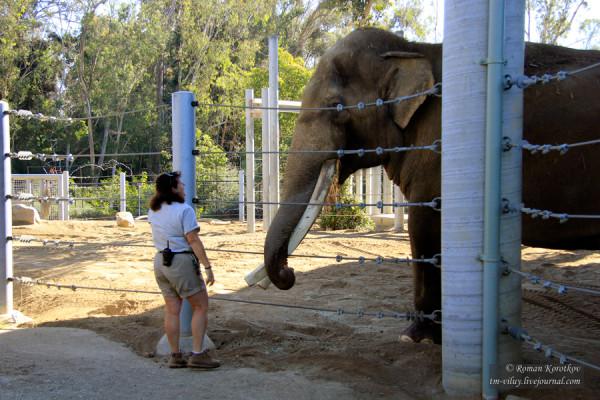 Зоопарк Сан-Диего, слон