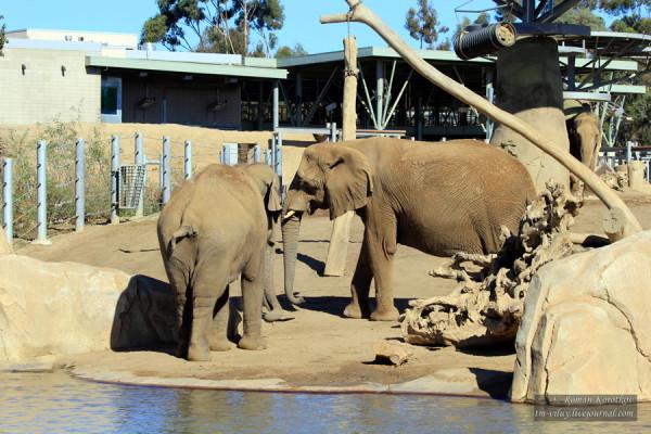 Зоопарк Сан-Диего, слоны