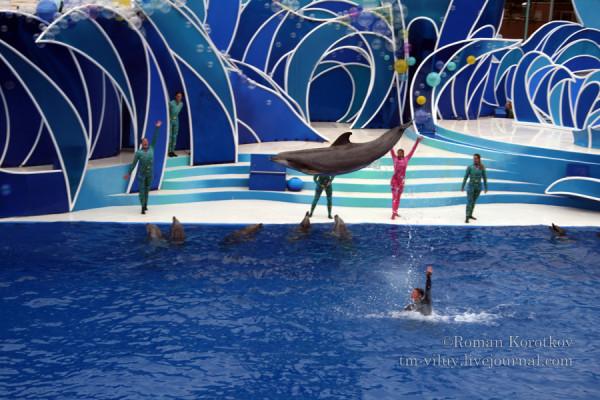 Дельфин в пыжке
