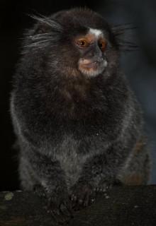 Где в лесах много-много диких обезьян