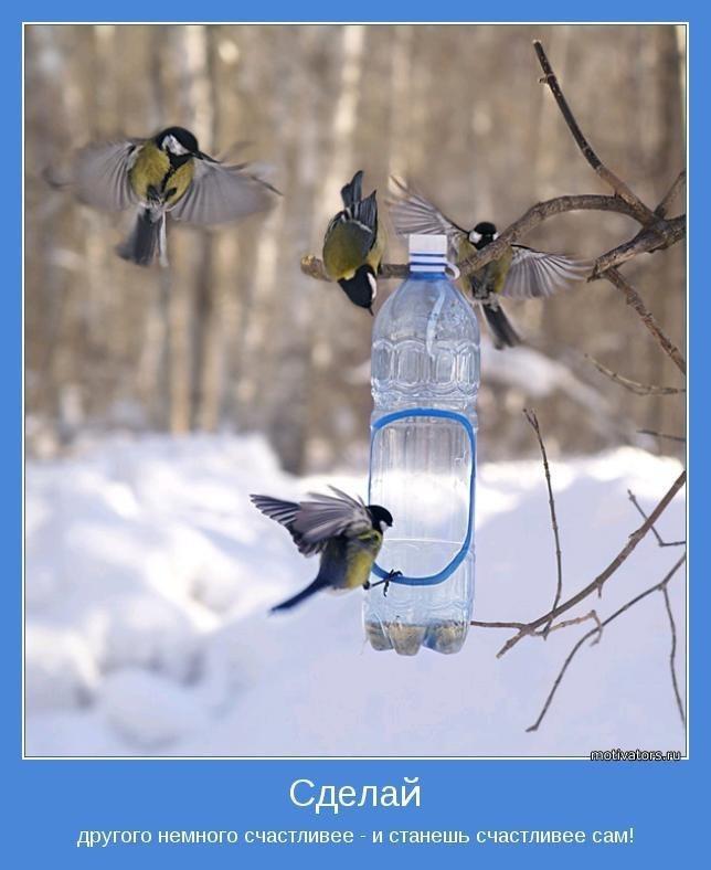 Экологи просят граждан кормить в морозы птиц.