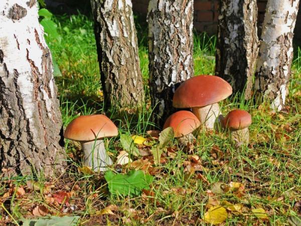 Ученые выяснили, что грибы - древнейшие существа на Земле
