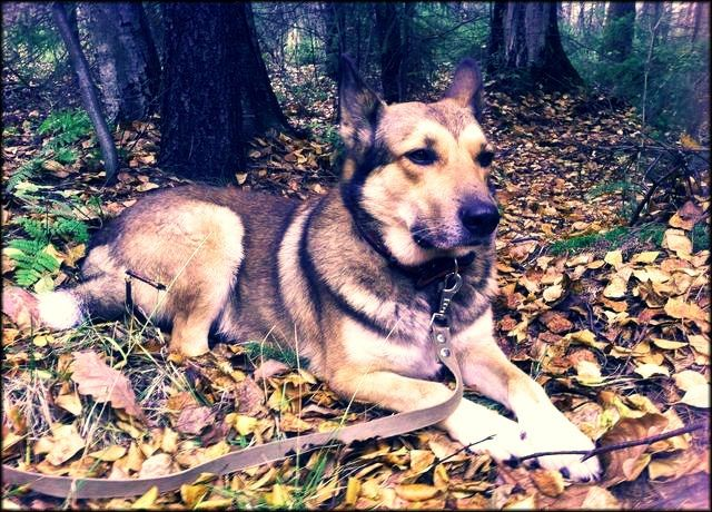 пёсец в лесу
