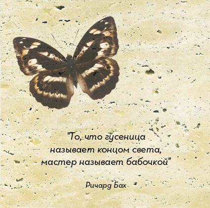 бабочка-гусеница