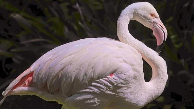 1391151671-8020-flamingo