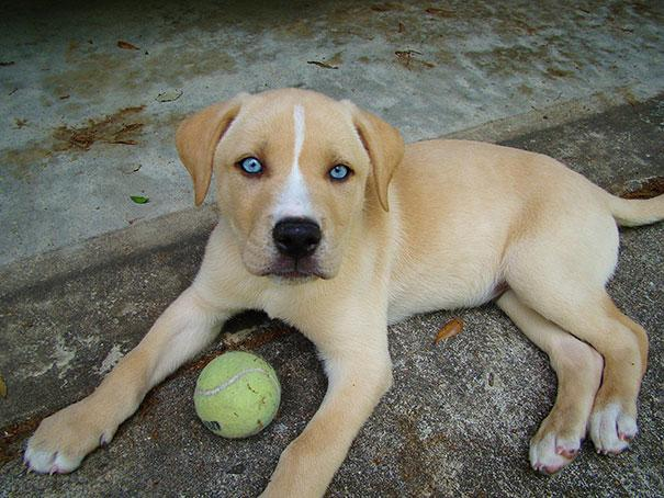 mixed-breed-dogs-9