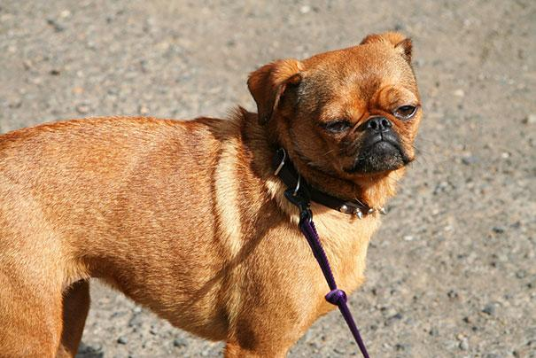mixed-breed-dogs-12