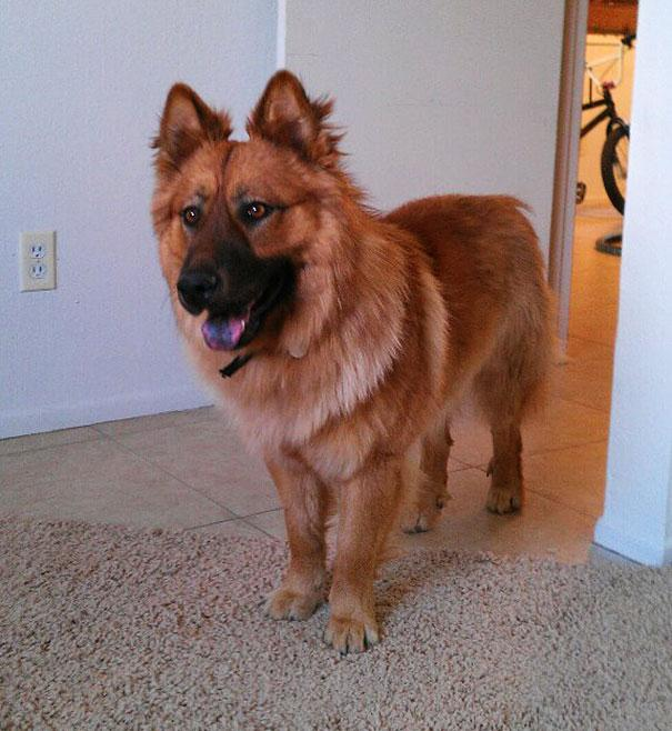 mixed-breed-dogs-13