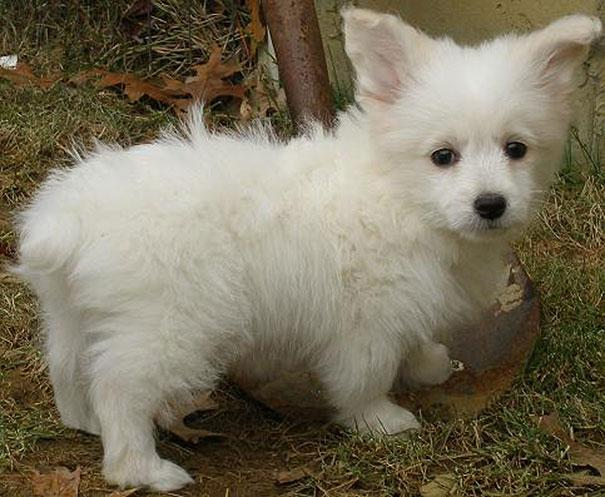 mixed-breed-dogs-24