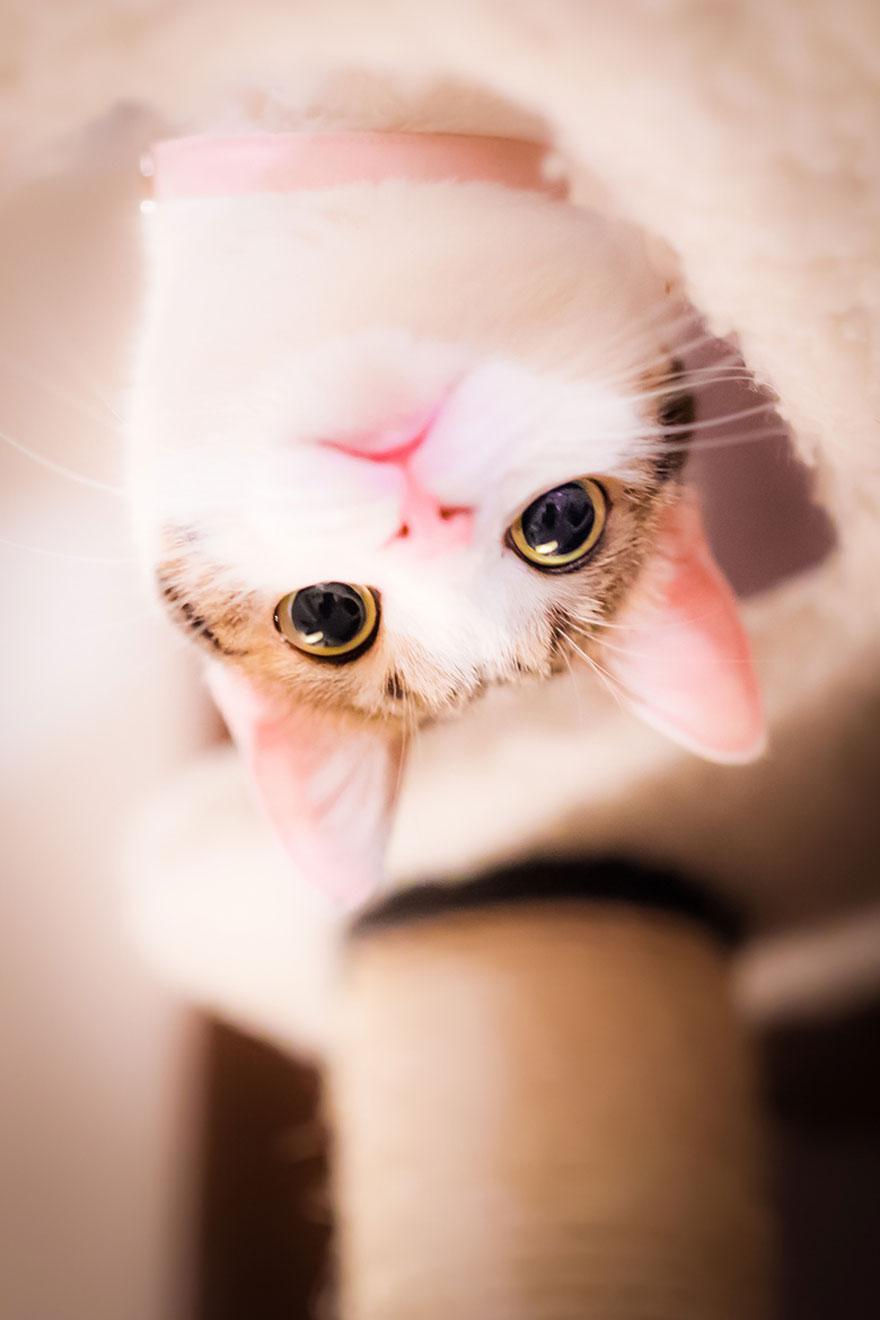 cat-portraits-seiji-mamiya-4__880