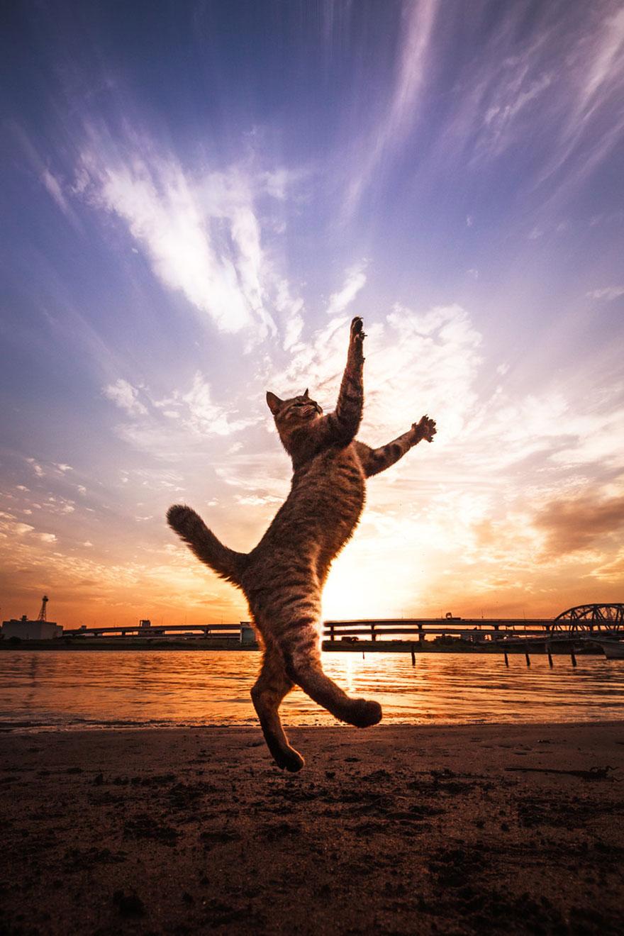 cat-portraits-seiji-mamiya-6__880