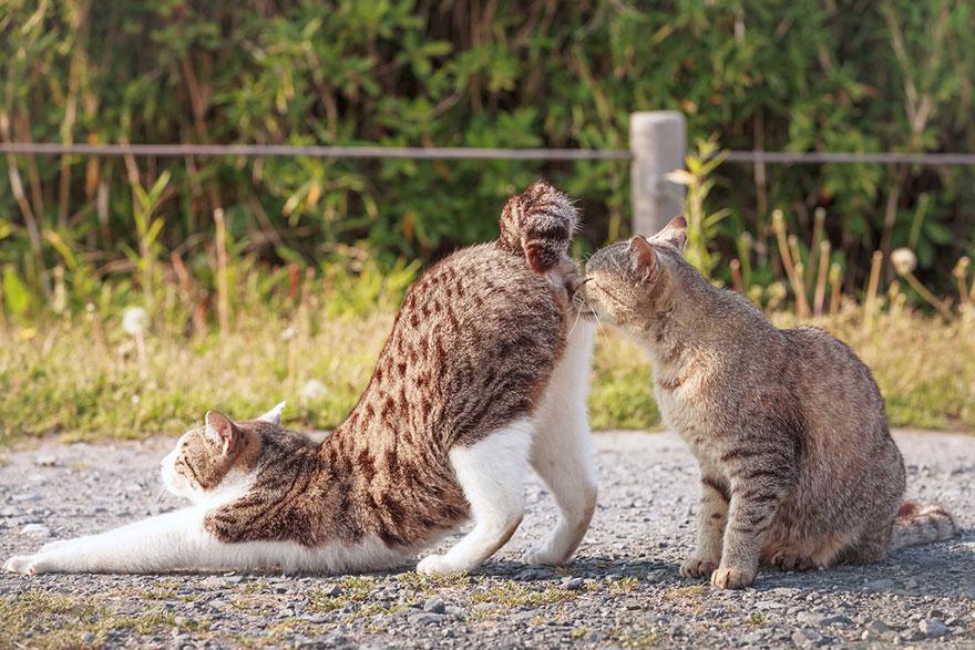 cat-portraits-seiji-mamiya-11__880