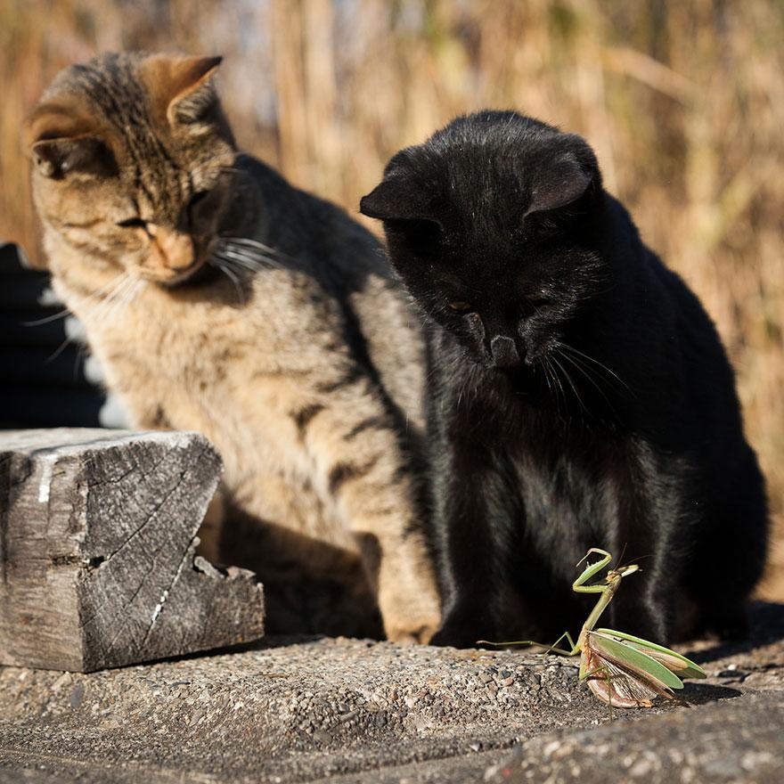 cat-portraits-seiji-mamiya-13__880