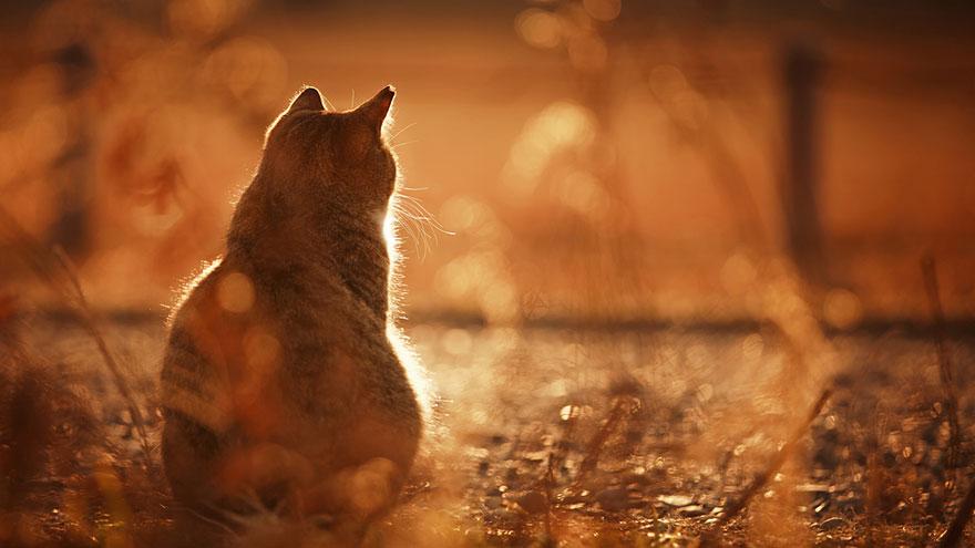 cat-portraits-seiji-mamiya-15__880