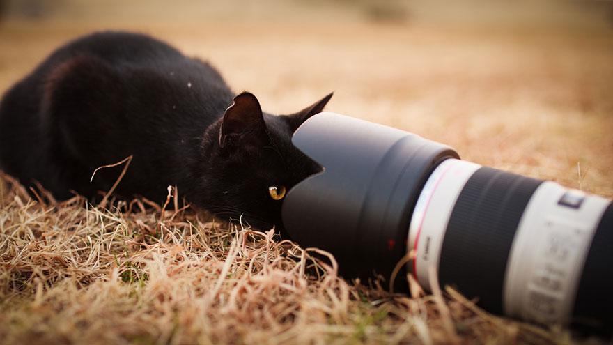 cat-portraits-seiji-mamiya-16__880