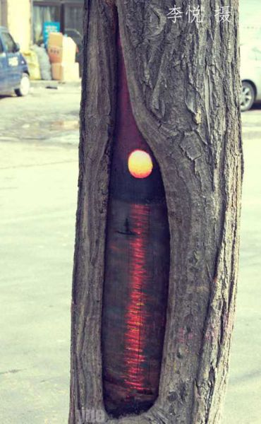 tree_holes_art_04