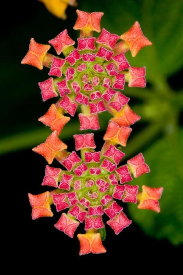 Фото необычные красивые цветы фото