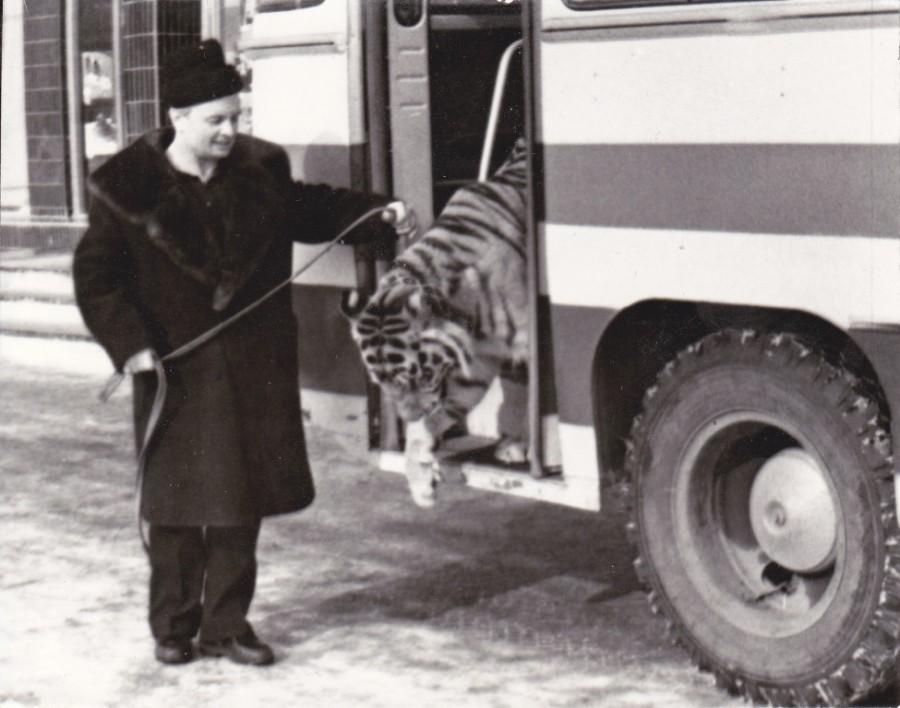тигр выходит из автобуса с Запашным