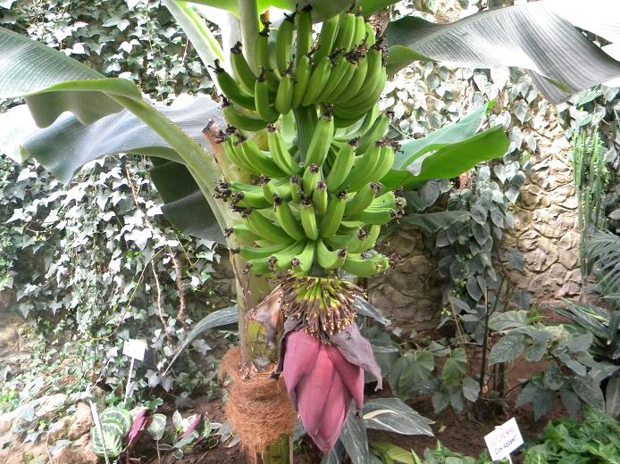 парк_пт_банан.png
