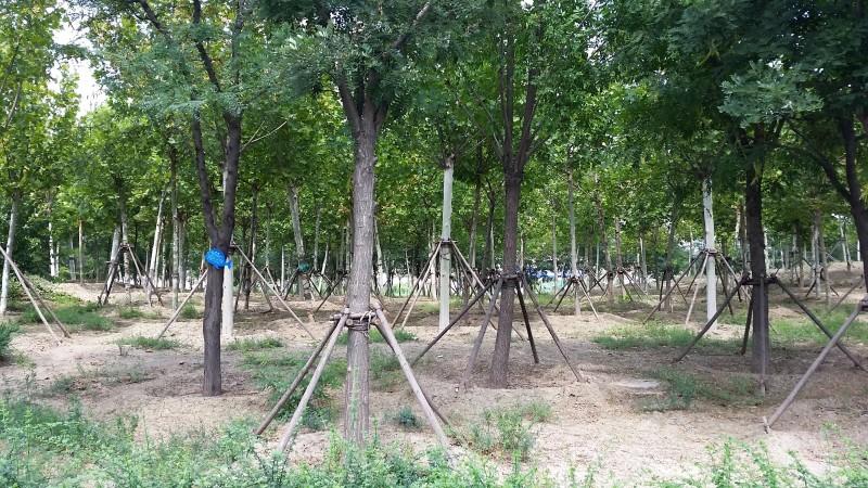 07_деревья без травы.jpg