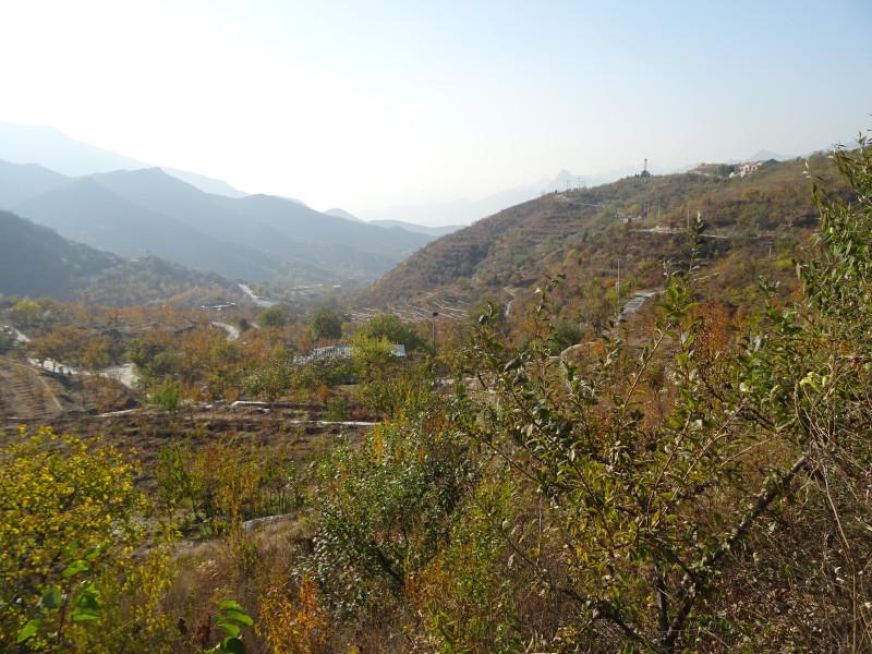 Плодовые деревья и горы