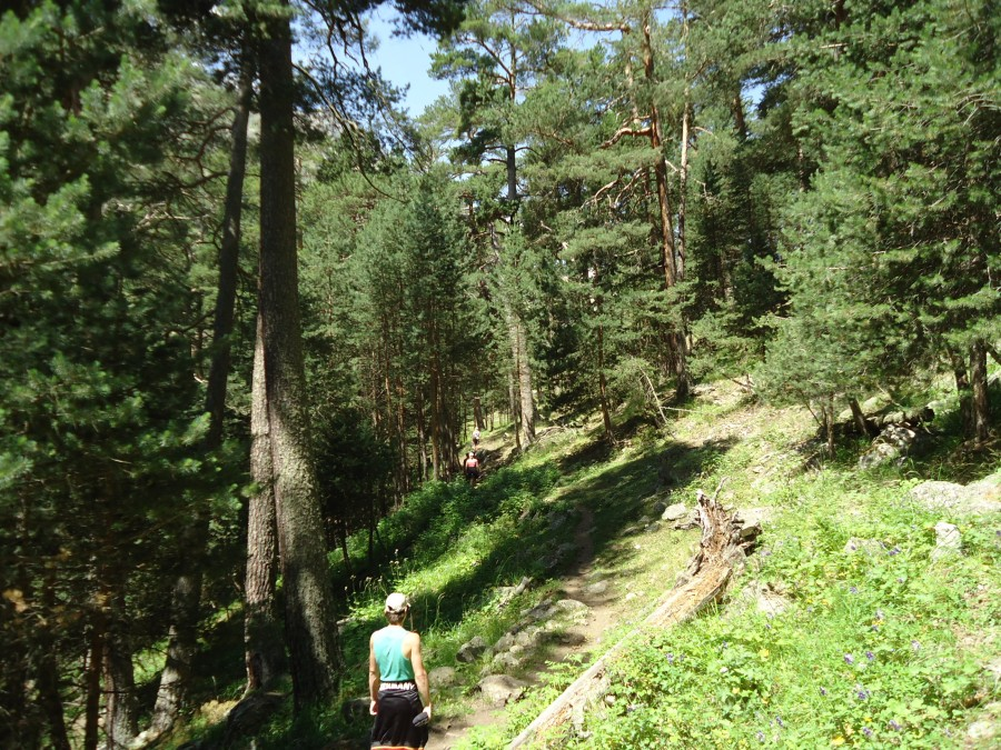 Натуральный лес