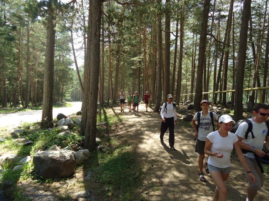 Дорога идет через лес