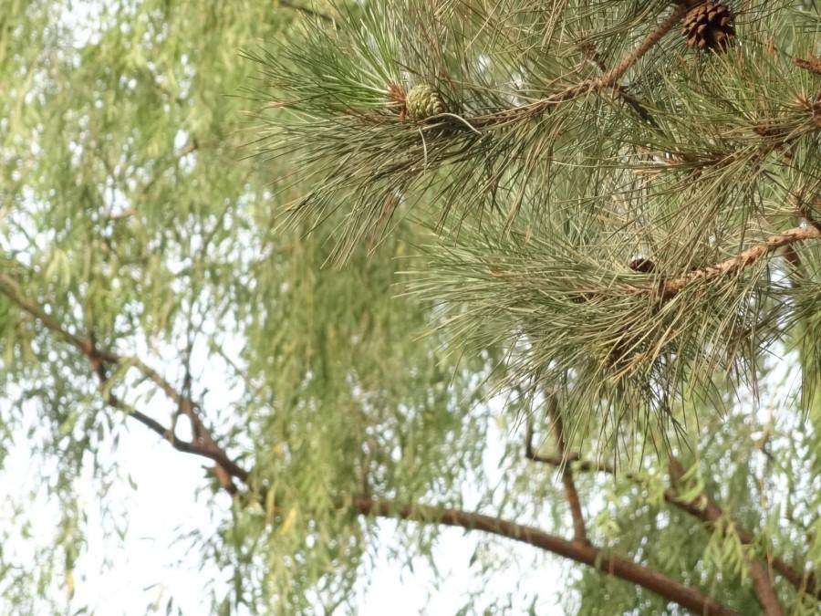 Иглы и листья