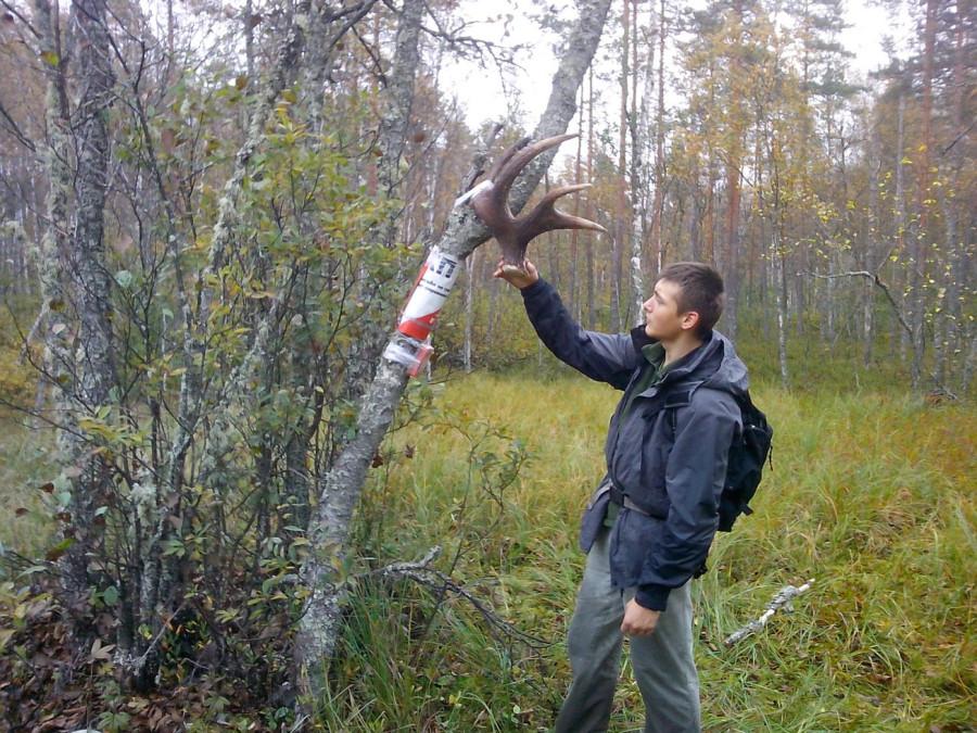 КП для лосей